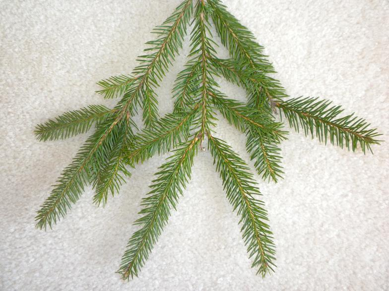 Short Needle Christmas Trees