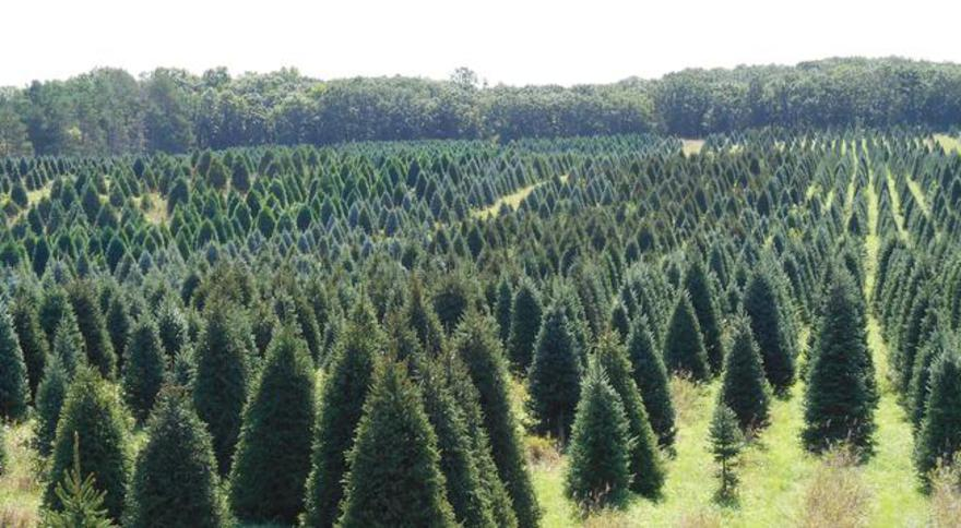 Petersen Christmas Trees | Clear Lake, MN 55319